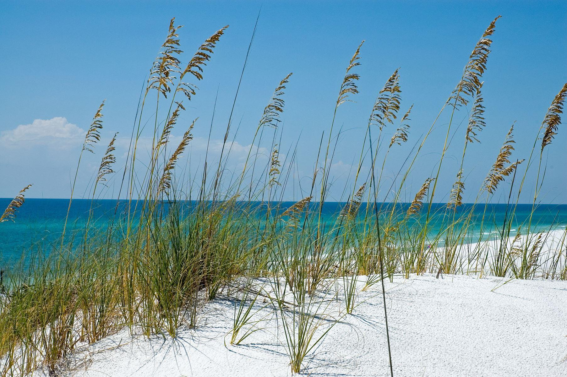 30A Sand Dune